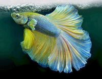 Beautiful_fish